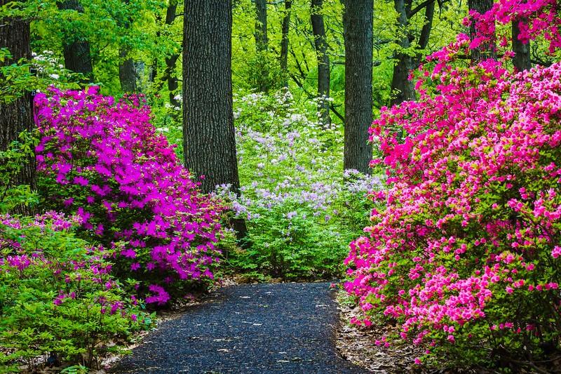 滨州詹金斯植物园(Jenkins Arboretum),鲜花盛开_图1-1