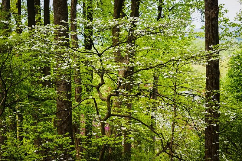 滨州詹金斯植物园(Jenkins Arboretum),鲜花盛开_图1-16