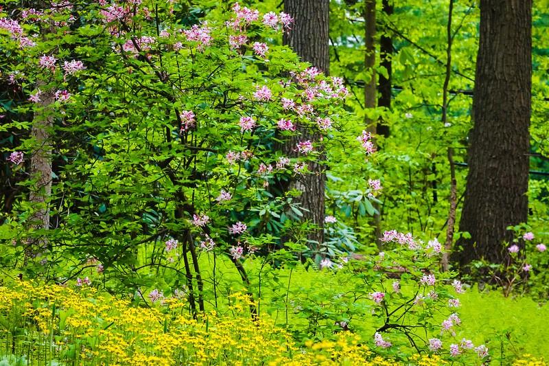 滨州詹金斯植物园(Jenkins Arboretum),鲜花盛开_图1-4