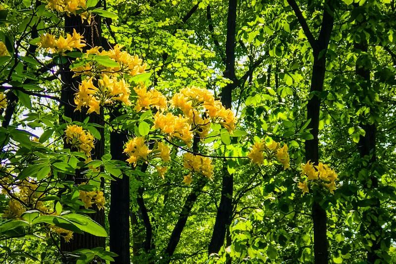 滨州詹金斯植物园(Jenkins Arboretum),鲜花盛开_图1-3