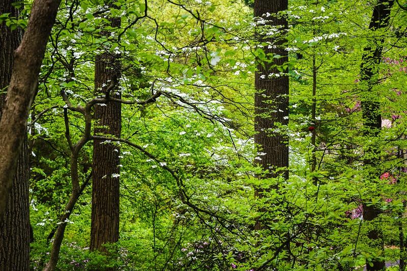 滨州詹金斯植物园(Jenkins Arboretum),鲜花盛开_图1-15