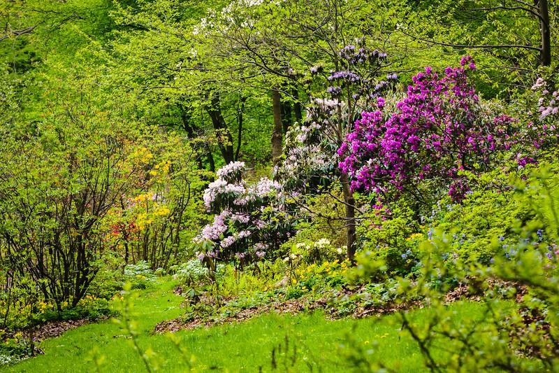 滨州詹金斯植物园(Jenkins Arboretum),鲜花盛开_图1-14