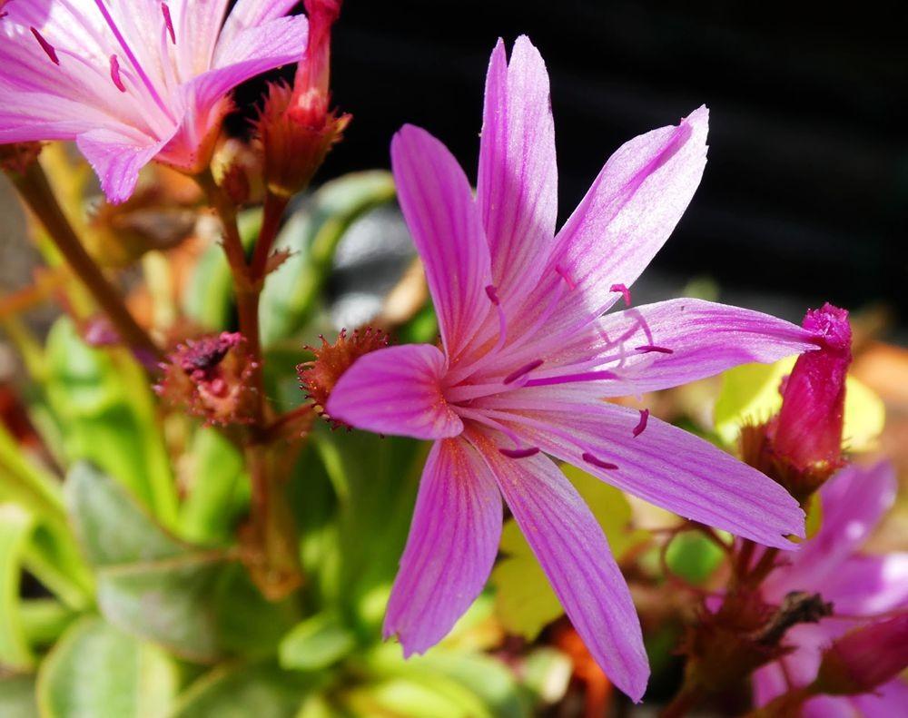 花卉日记---36_图1-3