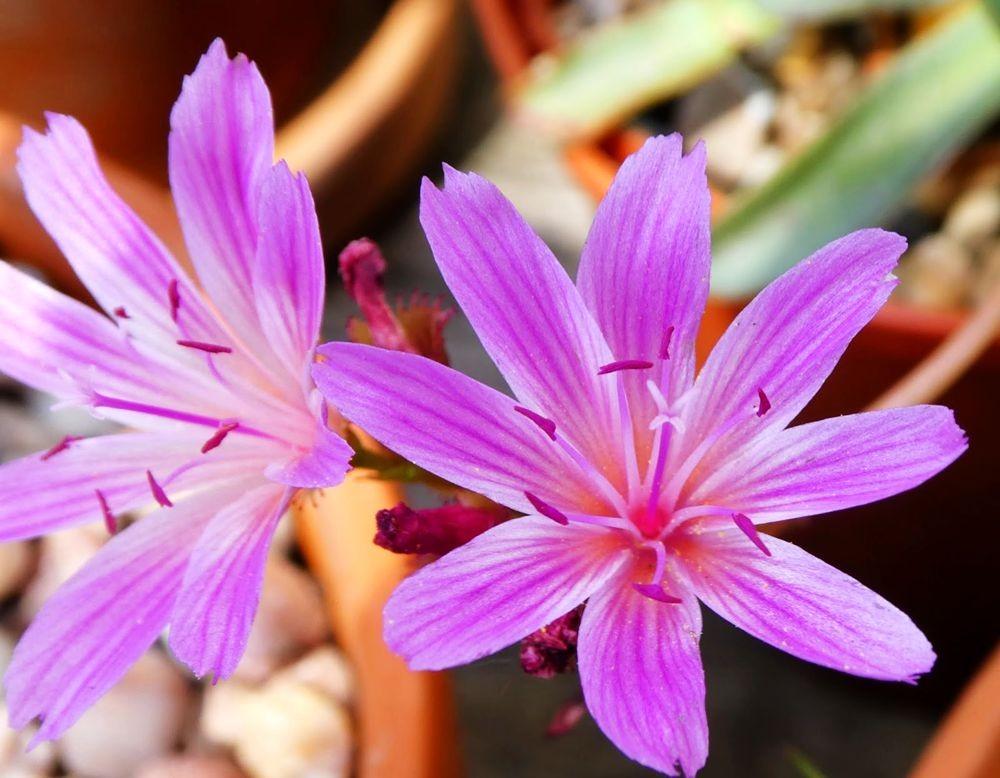 花卉日记---36_图1-4