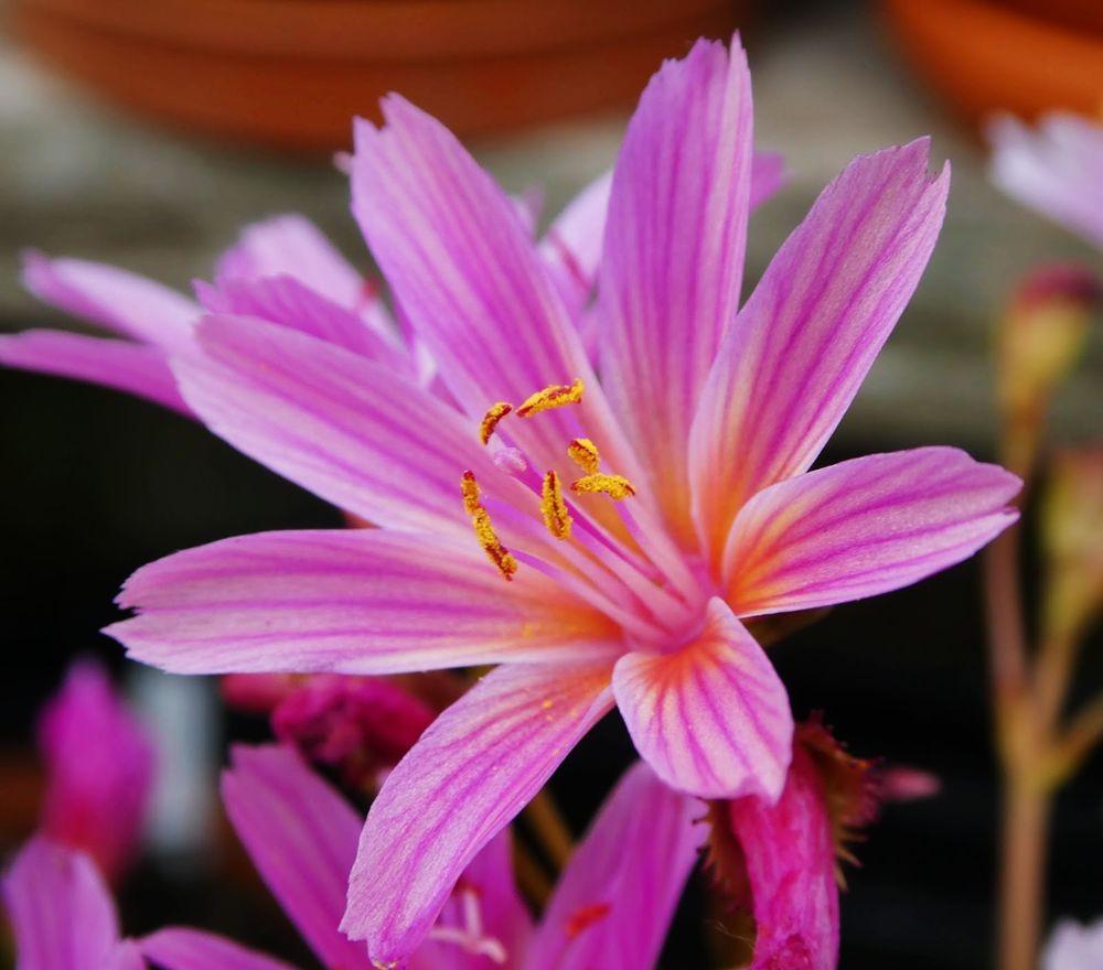 花卉日记---36_图1-5