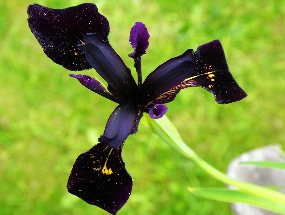 花卉日记---36_图1-6