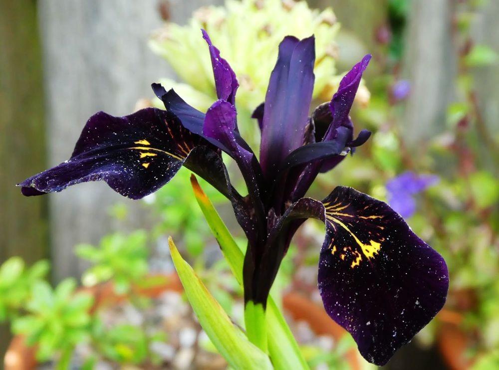 花卉日记---36_图1-7