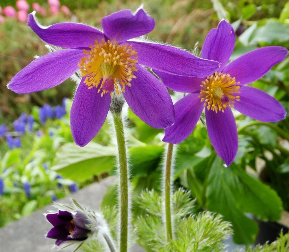花卉日记---36_图1-8