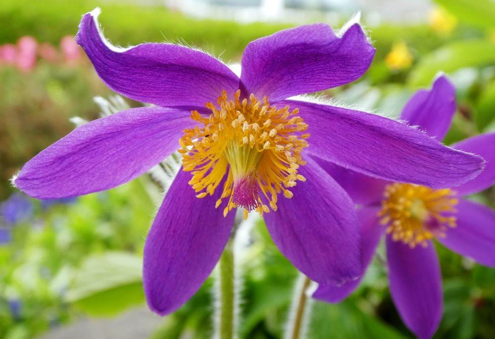 花卉日记---36_图1-11