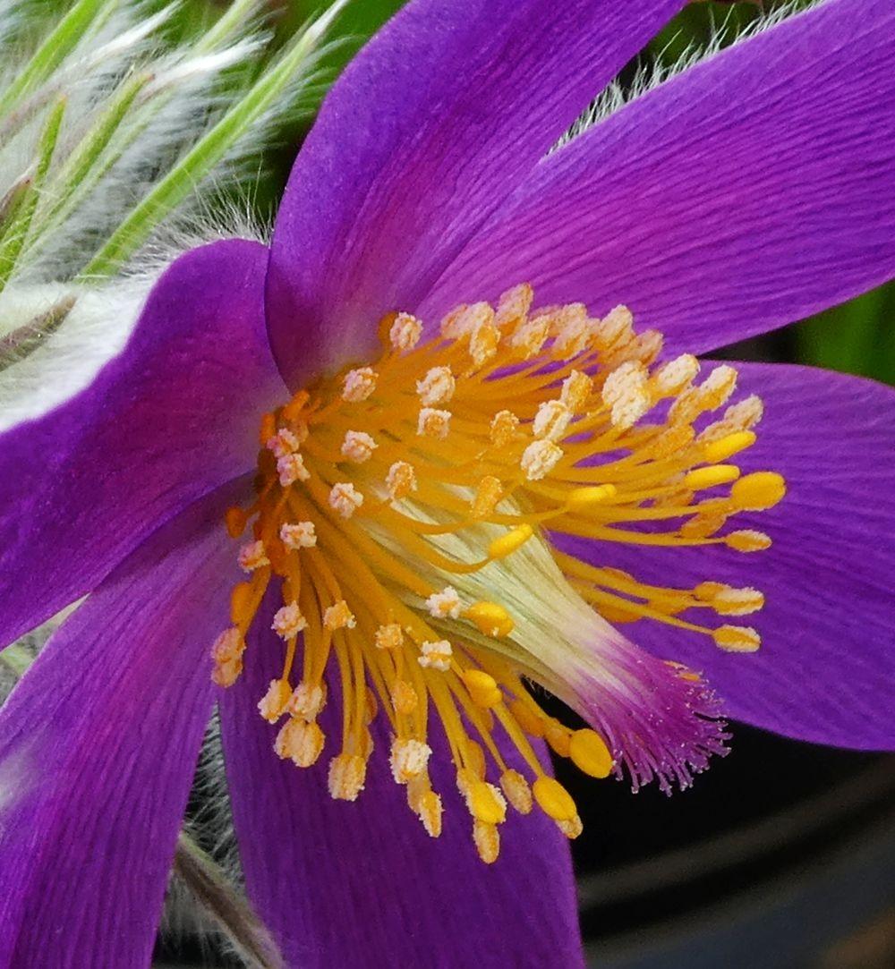 花卉日记---36_图1-12