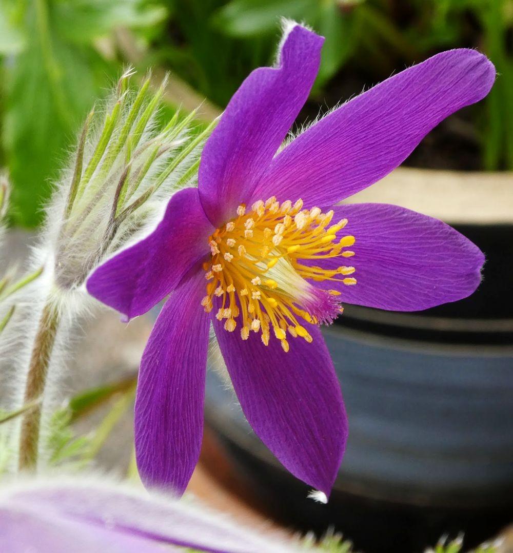 花卉日记---36_图1-13