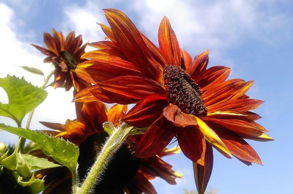 花卉日记---36_图1-14