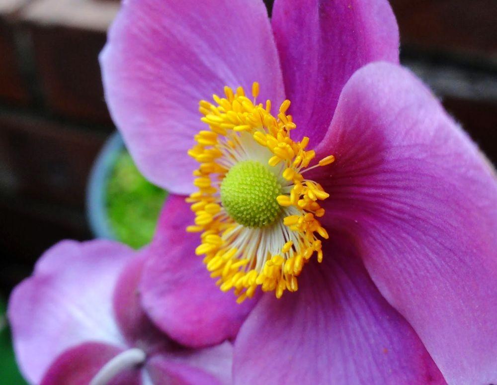 花卉日记---36_图1-18