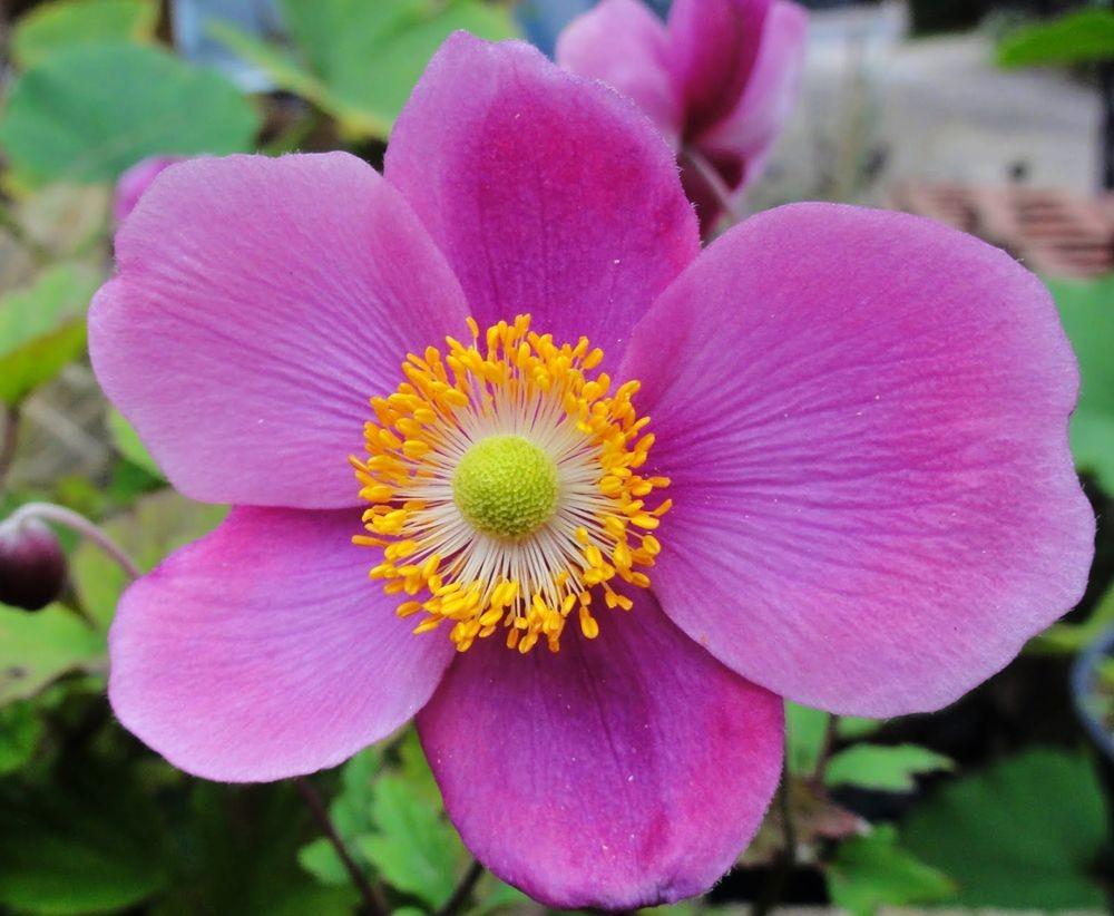 花卉日记---36_图1-19