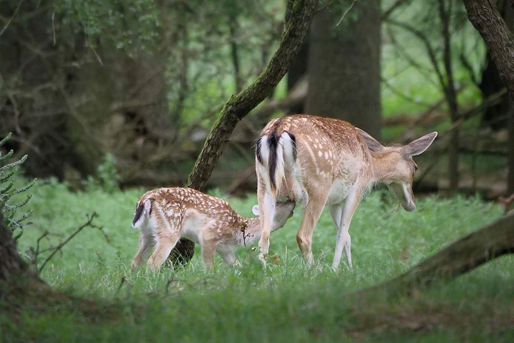 鹿家庭_图1-3