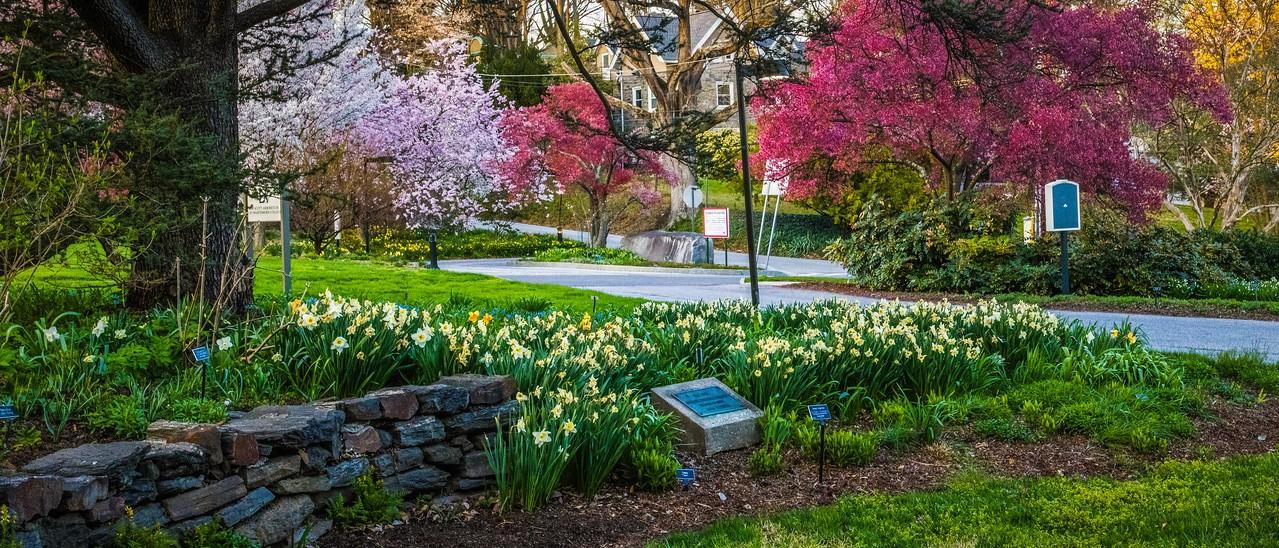 滨州斯沃斯莫尔学院(Swarthmore College),校园里花园_图1-4