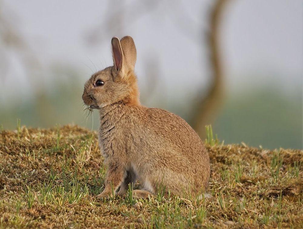 兔崽子_图1-2