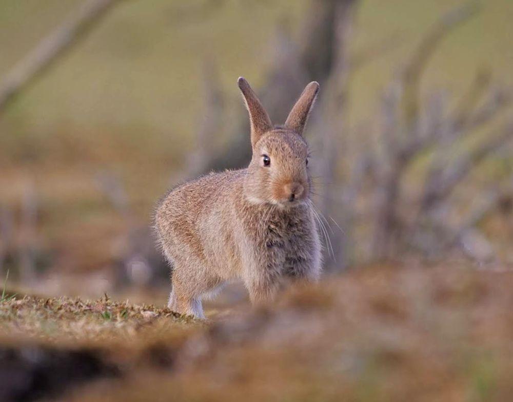 兔崽子_图1-3