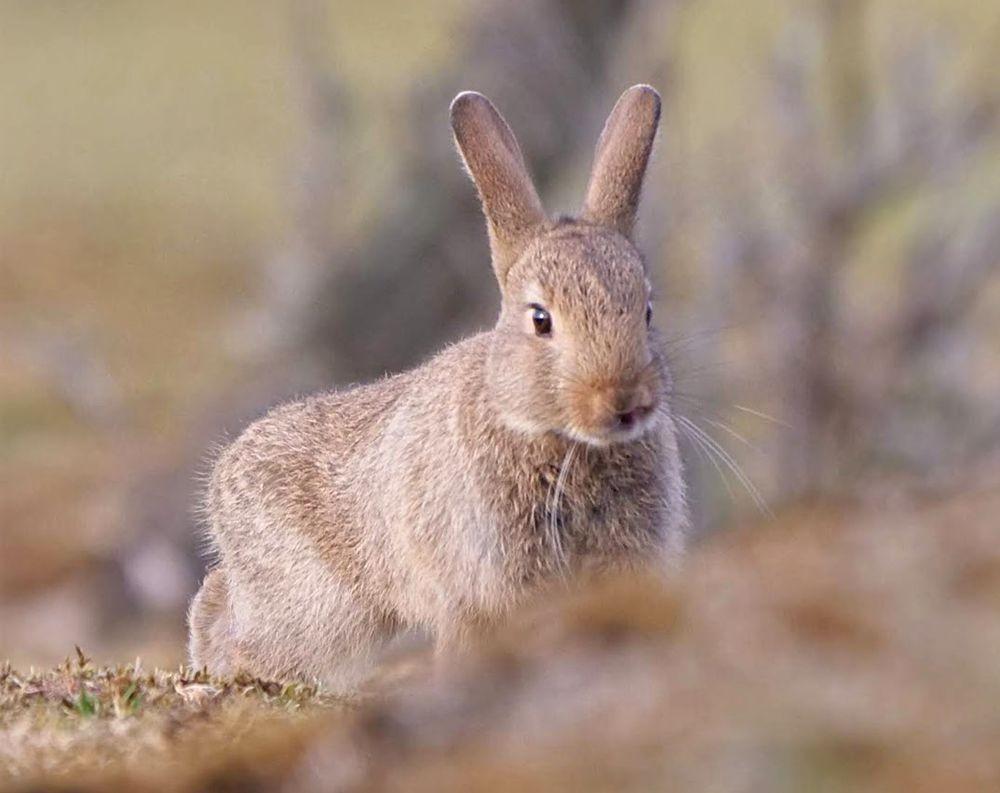 兔崽子_图1-4