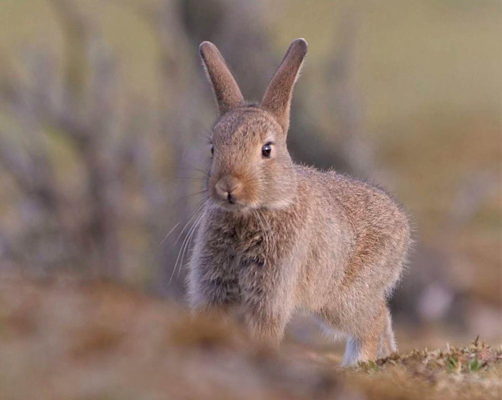 兔崽子_图1-5