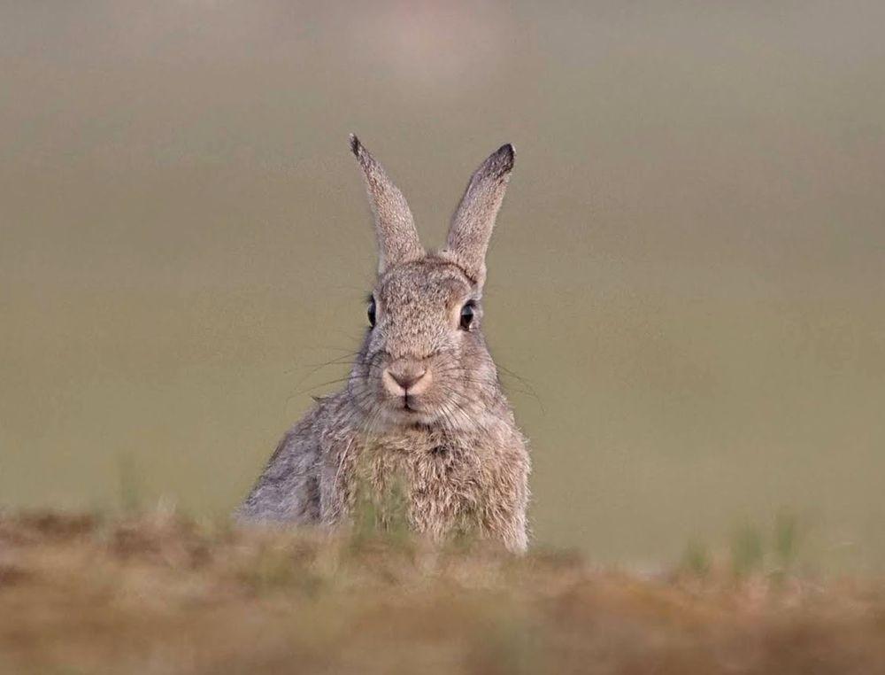 兔崽子_图1-6