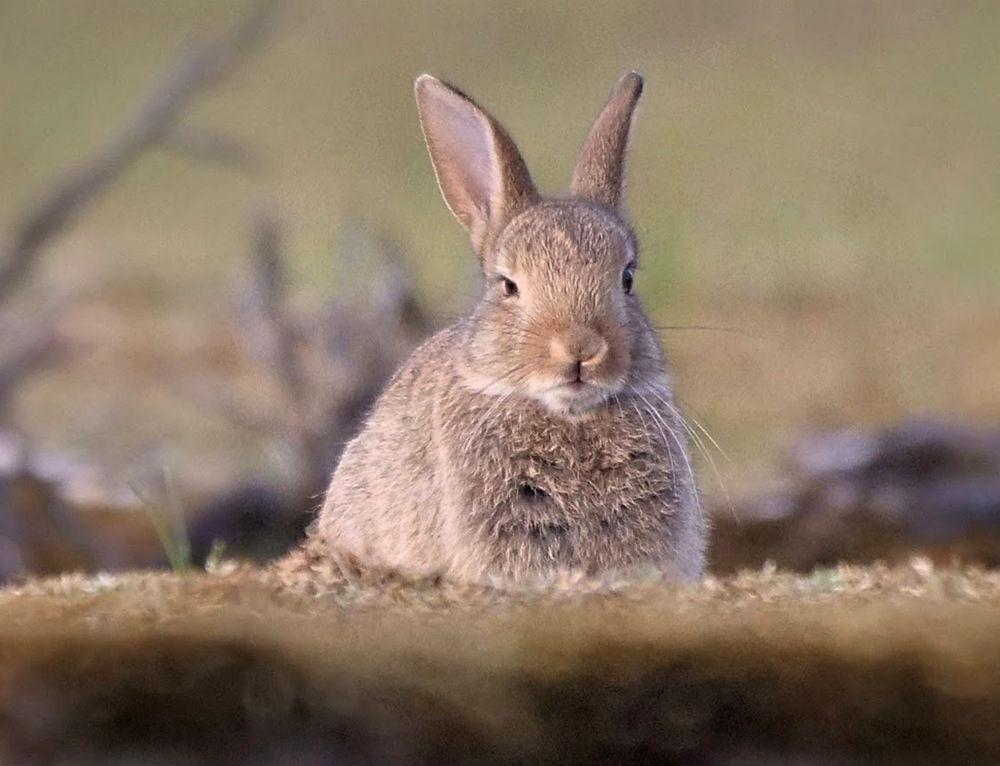 兔崽子_图1-7