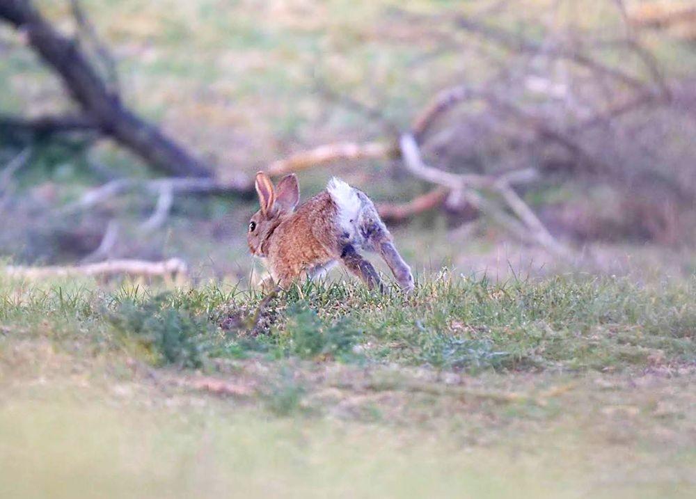 兔崽子_图1-8