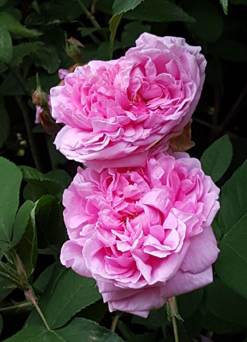 花卉日记---38_图1-3
