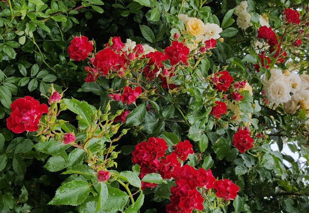 花卉日记---38_图1-4