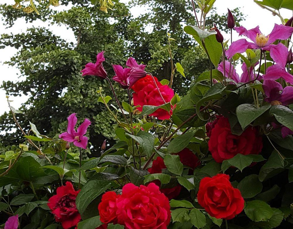 花卉日记---38_图1-5