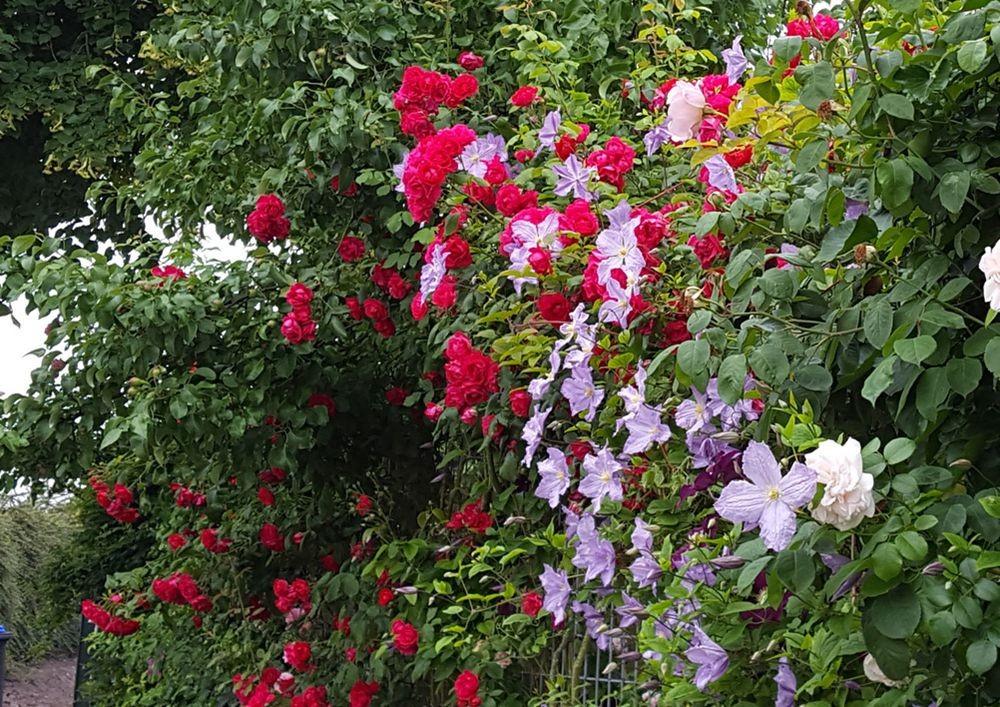 花卉日记---38_图1-7