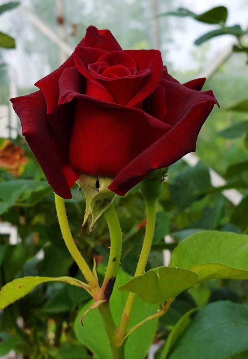 花卉日记---38_图1-11