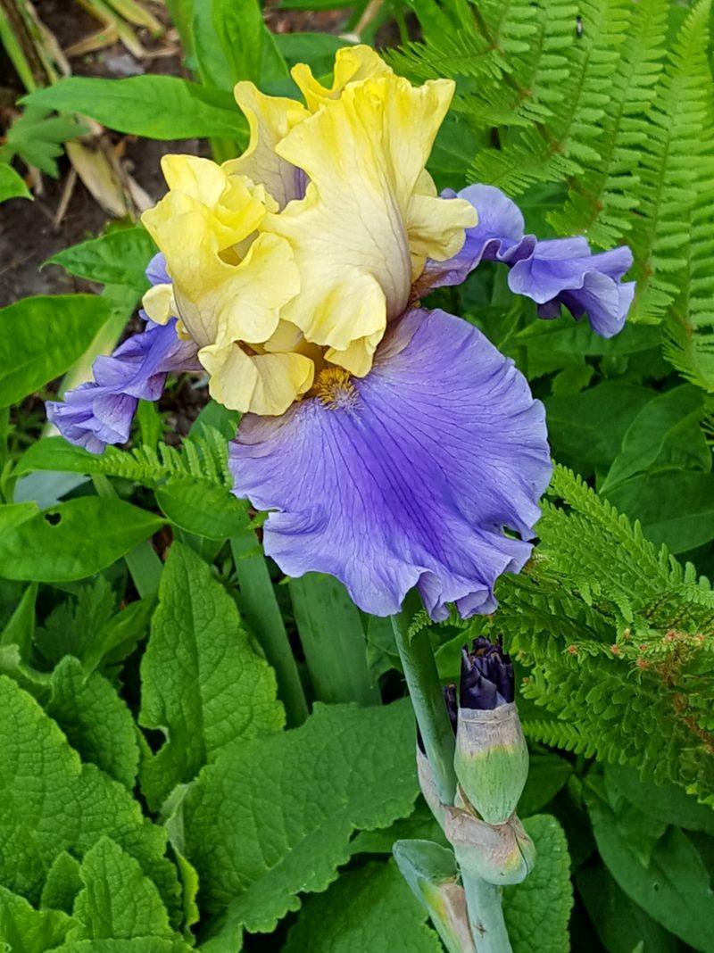 花卉日记---38_图1-13