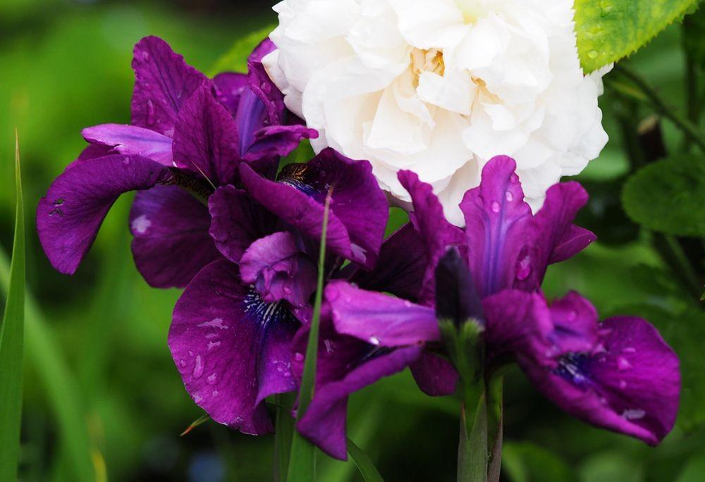 花卉日记---38_图1-14