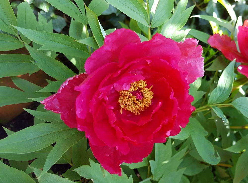 花卉日记---38_图1-18