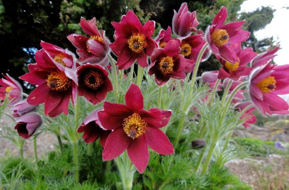 花卉日记---38_图1-21