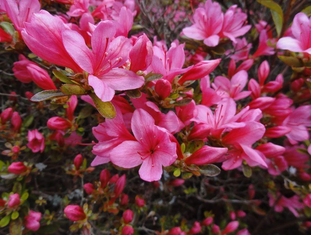 花卉日记---38_图1-23