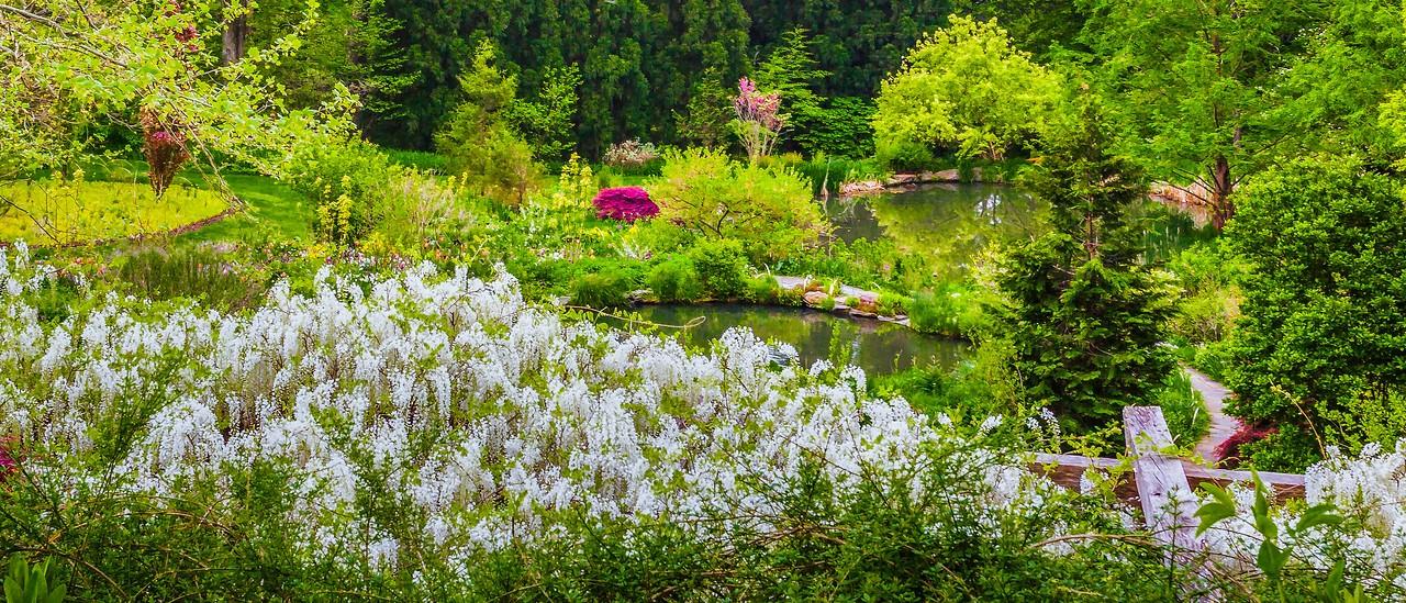 Chanticleer花园,春天气息_图1-12