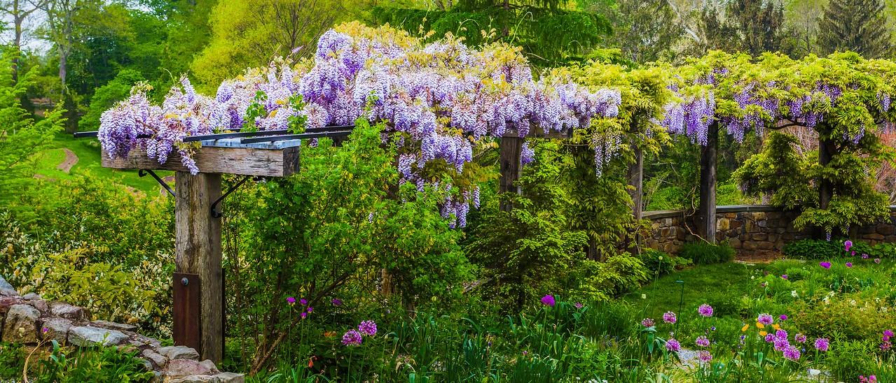Chanticleer花园,春天气息_图1-1