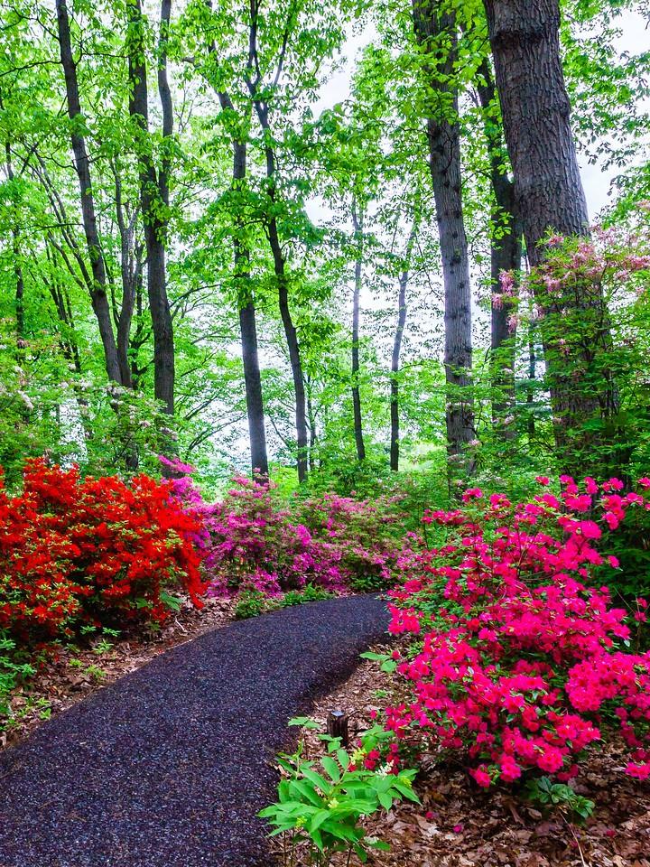 滨州詹金斯植物园(Jenkins Arboretum),花丛漫步_图1-6