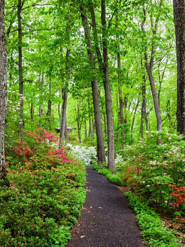 滨州詹金斯植物园(Jenkins Arboretum),花丛漫步_图1-7
