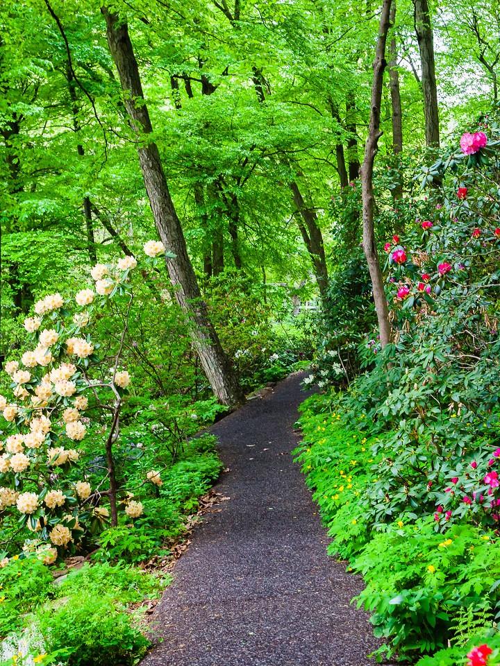 滨州詹金斯植物园(Jenkins Arboretum),花丛漫步_图1-8