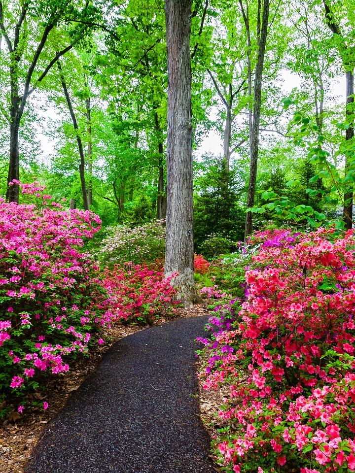 滨州詹金斯植物园(Jenkins Arboretum),花丛漫步_图1-1
