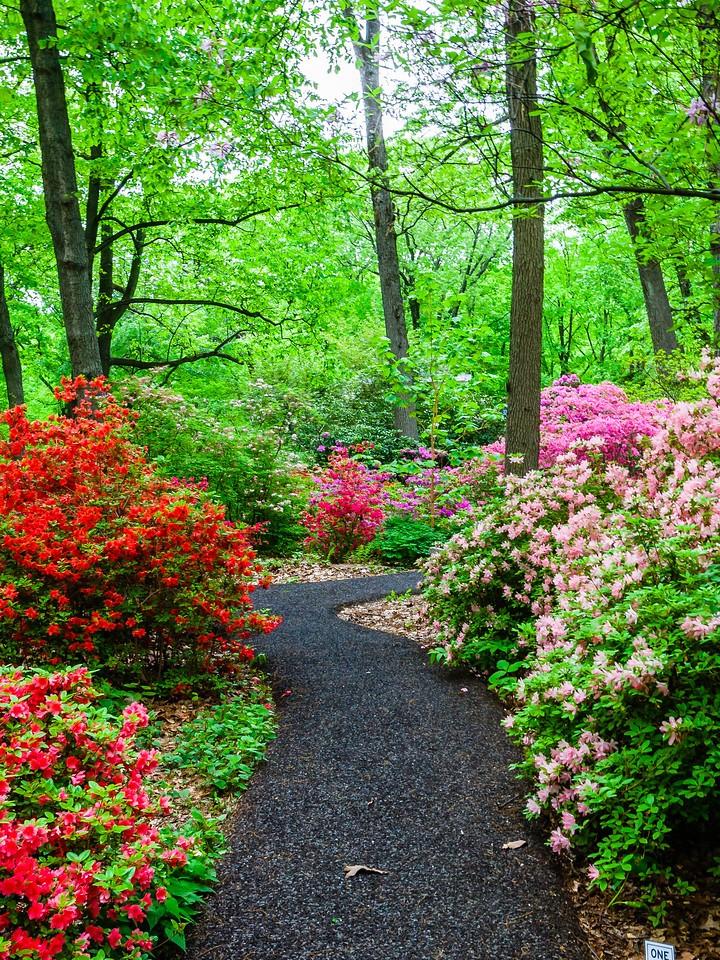 滨州詹金斯植物园(Jenkins Arboretum),花丛漫步_图1-4