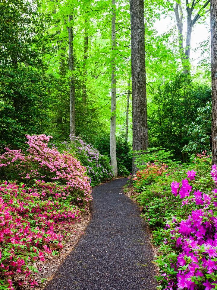 滨州詹金斯植物园(Jenkins Arboretum),花丛漫步_图1-2