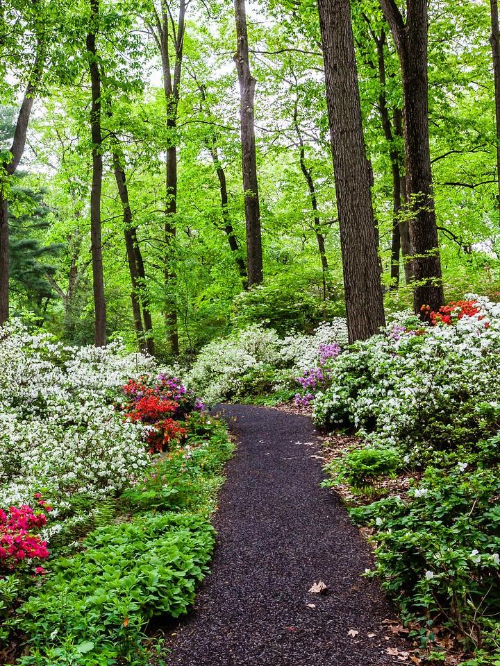 滨州詹金斯植物园(Jenkins Arboretum),花丛漫步_图1-5