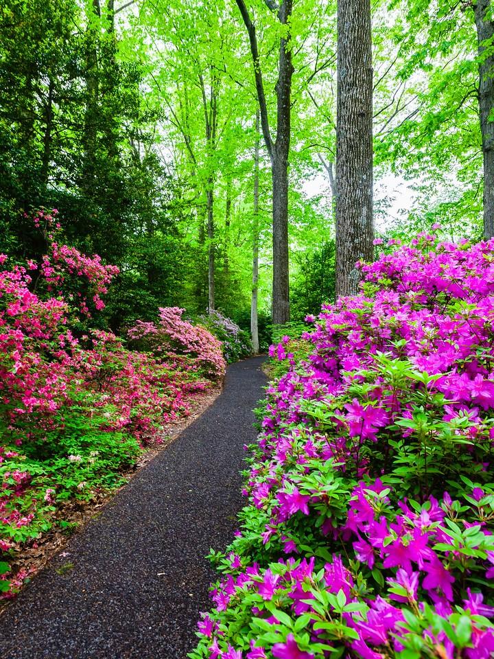 滨州詹金斯植物园(Jenkins Arboretum),花丛漫步_图1-3