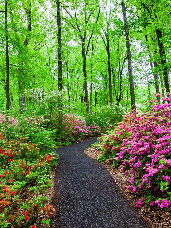 滨州詹金斯植物园(Jenkins Arboretum),花丛漫步_图1-10