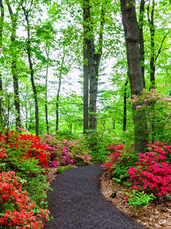 滨州詹金斯植物园(Jenkins Arboretum),花丛漫步_图1-9