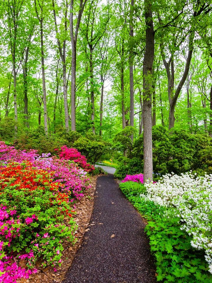 滨州詹金斯植物园(Jenkins Arboretum),花丛漫步_图1-11